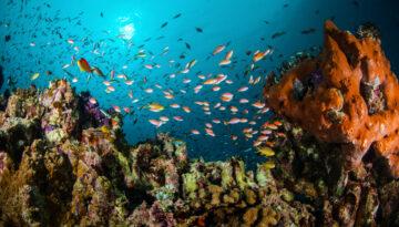NATURE Indonesia Gili fish